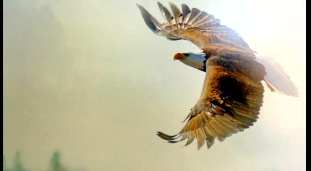 Fly Like An Eagle.. my new CD