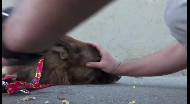 Homeless and Frightened Dog Rescued From Los Angeles River - Amazing!