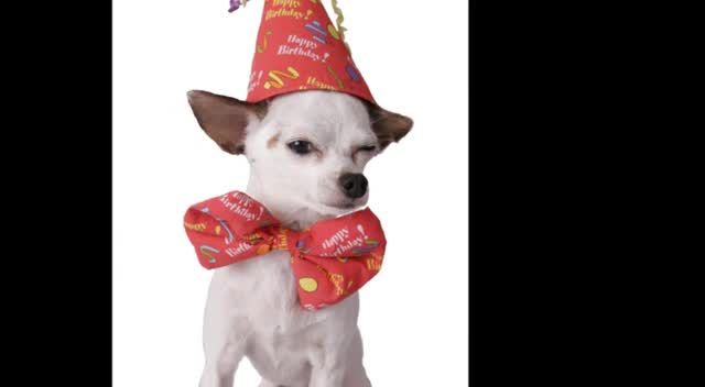 Birthday Pooch Video