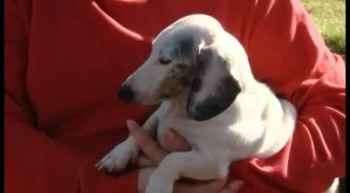 Blind, Deaf, 3-Legged Dog Saves Family From House Fire - a Hero!