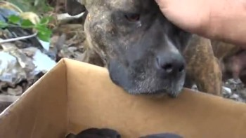 Incredible Dog Rescue: How an iPhone saved the lives of 5 Puppies! (please share).