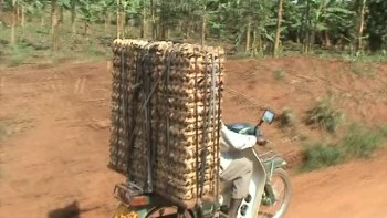 Eggs on a boda Uganda