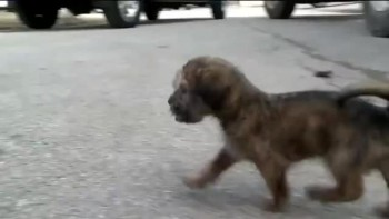 Dying Puppy Thrown in the Trash Gets Rescued