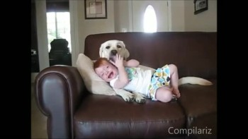 The BEST Compilation of Babies Laughing at Dogs on the Internet!