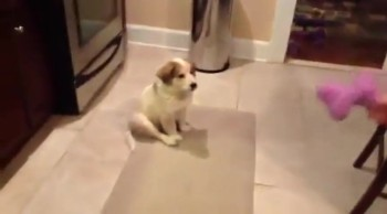 Puppy Plays Catch For The First Time and Does the CUTEST THING!