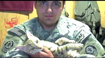 See How an Afghan Cat Saved a U.S. Soldiers Life