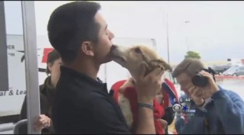 Soldier Reunites With the Puppy He Saved From the Streets of Afghanistan