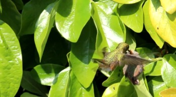 Parenting Lessons from a  Hummingbird