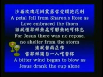 陰影籠罩沙崙玫瑰 2006年04月14日