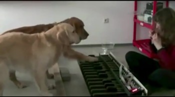 Dogs Play Piano Pitch Perfectly - INCREDIBLE