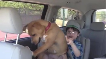 Severely Abused Dog and Autistic Boy Are a Match Made in Heaven