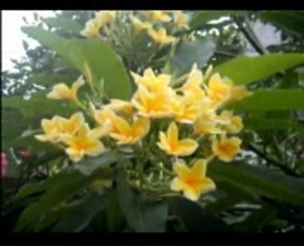 The Twin Singers - Lagu Rohani Terbaru - Kau Mahkotaiku (He Crowned Me)