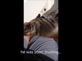 Baby Sea Lion Suddenly Boards Boat and Snuggles with Humans!