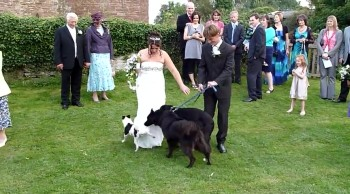 Dog Gives a Bride a Special Wedding Present - You'll Love This Blooper!