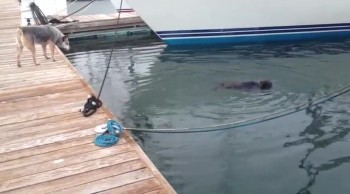 Cutest Game of Hide and Seek With Sea Otter and Dog