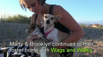 Marty, Brooklyn and Penny: Chihuahua rescue in South Central Los Angeles.  Please share.