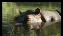 Couple Has the Most Incredible Bond with a Wild Hippo