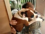 Dog Literally Hugs Soldier After 15 Months in Iraq