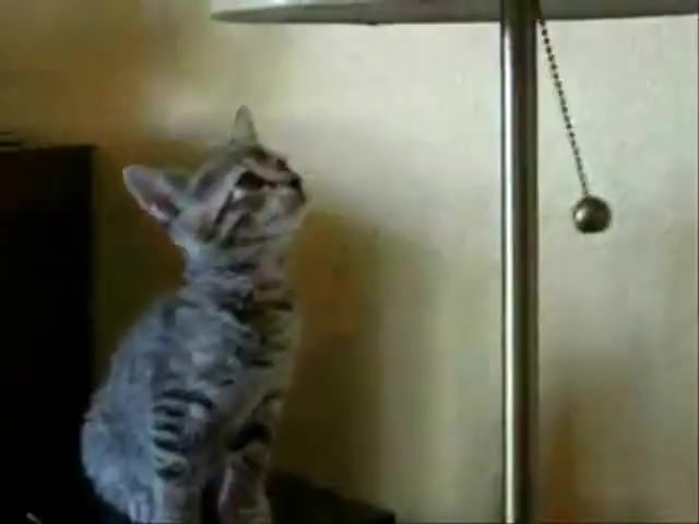 Hypnotised Kitten