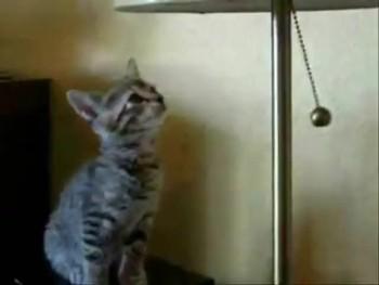 Hypnotised Kitten