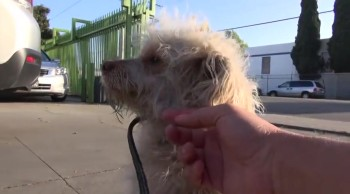 Puppy Stranded in Middle of the Road is Saved