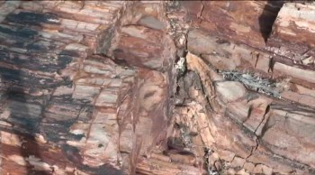 Grand Canyon: Is Petrified Wood Proof of Millions of Years of Time?