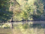 Kayaking on The Amite River