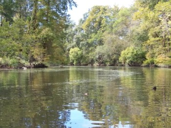 Kayaking on Bayou Manchac--Part 2