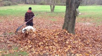 You'll Wish You Could Be as Joyful as This Doggie in a Pile of Leaves - Awww!