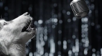 See Why These Dogs Are Singing... It's WAY