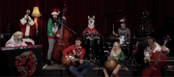 Little Drummer Boy Performed by Dogs!