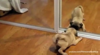 Puppies and Kittens Discover their Reflections -- So Cute!
