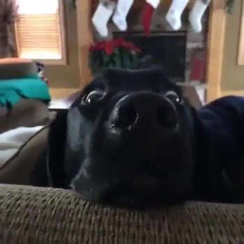 Dog Has the Funniest Reaction to a Word
