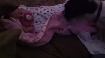 Sweet Dog Gently Covers Baby with Blanket
