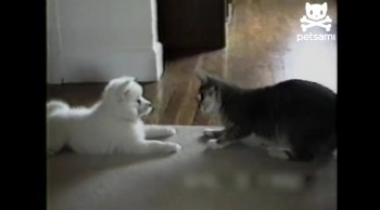 Cute Cat Teaches A New Dog Old Tricks!  So Cute!