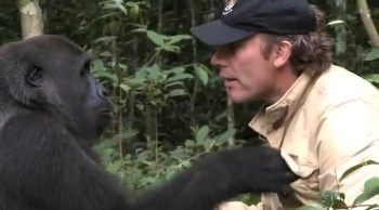 Man Reunites with Gorilla He Hand-Raised--So Heartwarming!