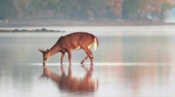 Like A Deer That Longs For Running Streams ~ Psalm 42 ~ by Glen Shulfer