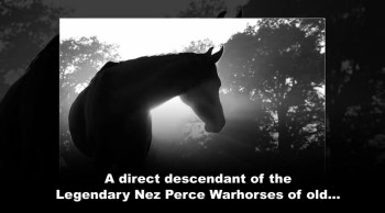 Xulon Press book Spirit of the Warhorse; Kitty Silverwings, An Appaloosa Story | Patti Ansuini