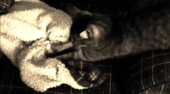 Cat kneading...