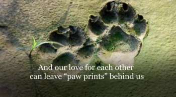 Xulon Press book Paw Prints | Susan Safrit