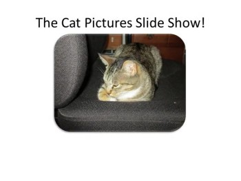 The Cat Pictures Slide Show 004