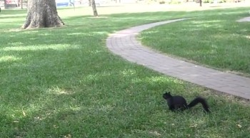 THE BLACK SQUIRREL cute funny animal