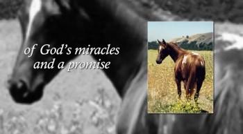 Xulon Press book Spirit of the Warhorse; Kitty Silverwings, An Appaloosa Story   Patti Ansuini
