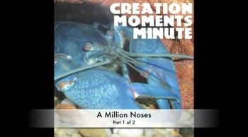 Millions of Noses (Part 1 of 2) | Creation Moments Minute