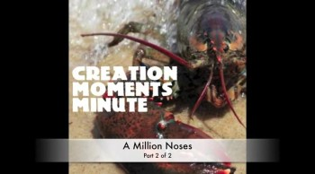 Millions of Noses (Part 2 of 2) | Creation Moments Minute