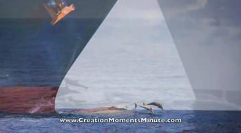Intelligent Animal Antics | Creation Moments Minute