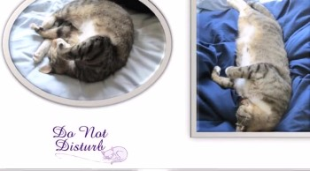 Picture slideshow of the cat!! v 10