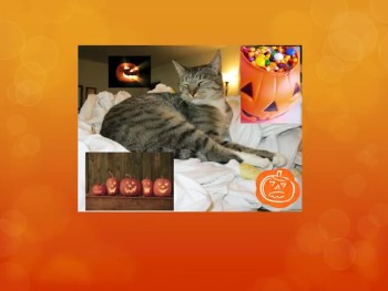 happy halloween 2014 from the cat