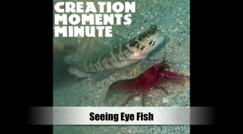 The Shrimp That Uses a Seeing-Eye Fish!