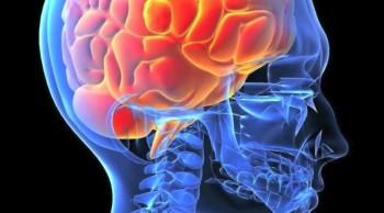 A Brain To See God's Handiwork
